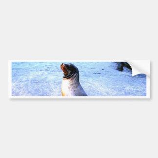 Sea lion calling for love bumper sticker