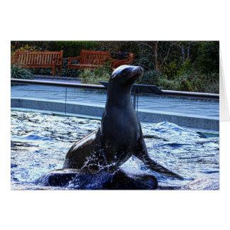 Sea Lion Cards