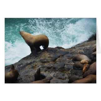 Sea Lion Cards