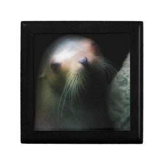 Sea lion Design Gift Box