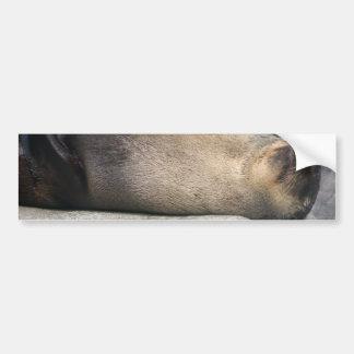 Sea Lion Dreaming Bumper Sticker