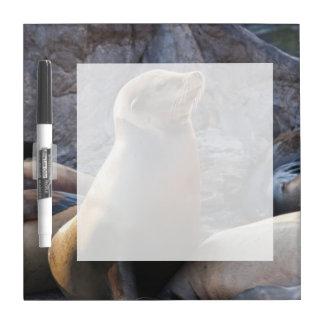 Sea Lion Dry Erase Board
