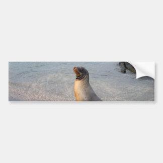Sea Lion Galapagos Island Bumper Stickers