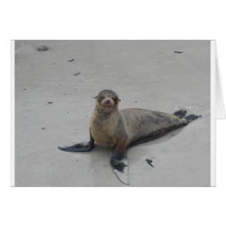 Sea Lion in the Galapagos Islands!! Cards