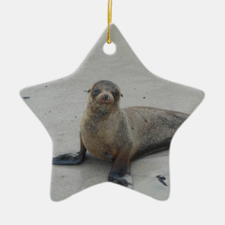 Sea Lion in the Galapagos Islands!! Ceramic Star Decoration