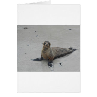 Sea Lion in the Galapagos Islands!! Greeting Card