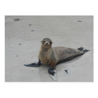 Sea Lion in the Galapagos Islands!! Post Card