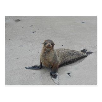 Sea Lion in the Galapagos Islands!! Postcard