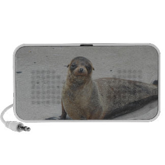 Sea Lion in the Galapagos Islands!! iPhone Speaker