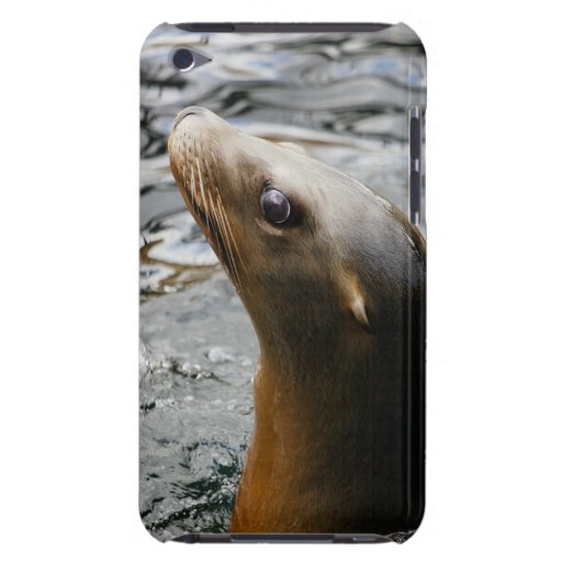 Sea Lion In The Water - Animal Photography Case-Mate iPod Touch Case