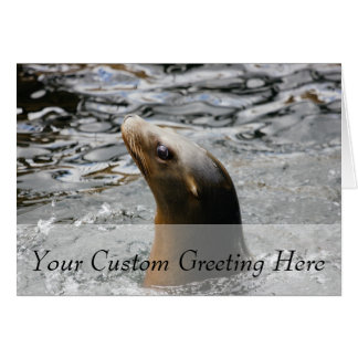 Sea Lion In The Water - Animal Photography Greeting Card