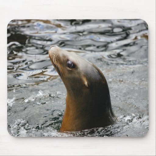 Sea Lion In The Water - Animal Photography Mousepad