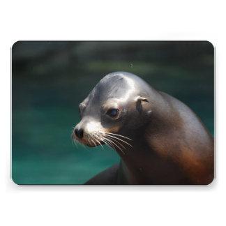Sea Lion Invites