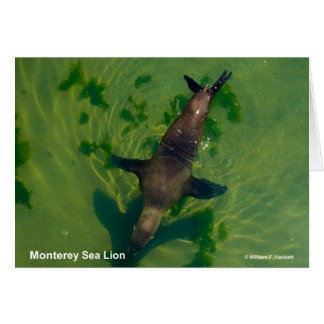 Sea Lion Monterey California Products Cards