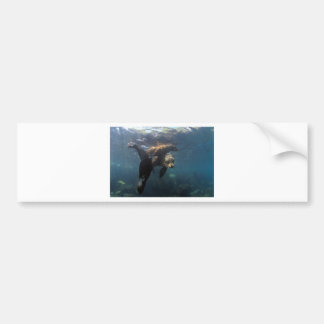 Sea lion mother and pups Galapagos Islands Bumper Stickers