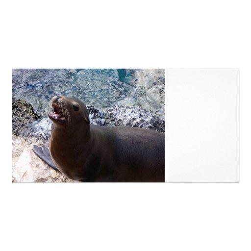 sea lion mouth open photo cute sea animal customized photo card
