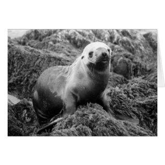 Sea Lion notecard Greeting Card