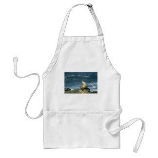 Sea Lion On Rock Aprons