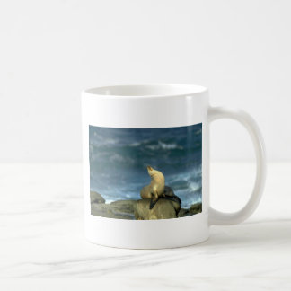 Sea Lion On Rock Coffee Mugs