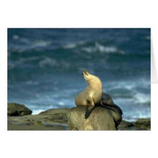 Sea Lion On Rock Greeting Card