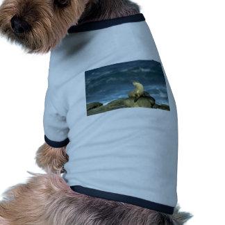 Sea Lion On Rock Ringer Dog Shirt