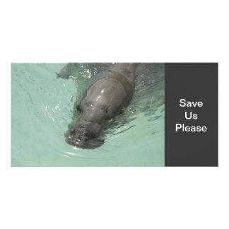 Sea Lion Photo Cards