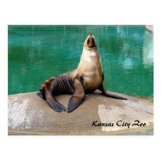 Sea Lion Post Card