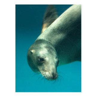 Sea Lion Postcards