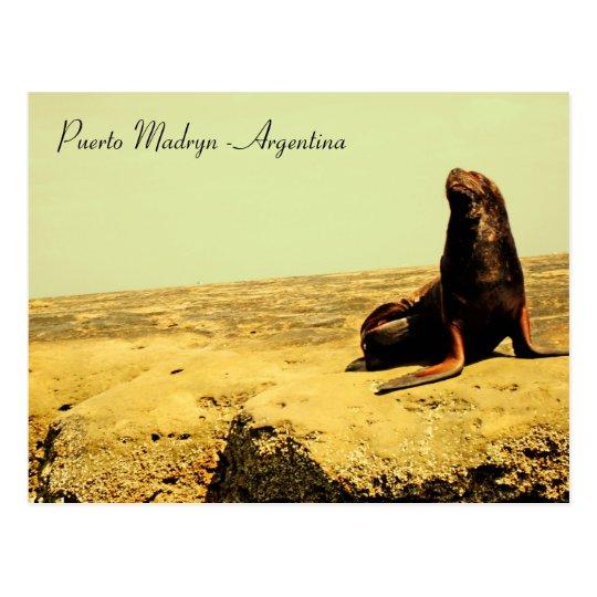Sea Lion. Puerto Madryn - Argentina Postcard