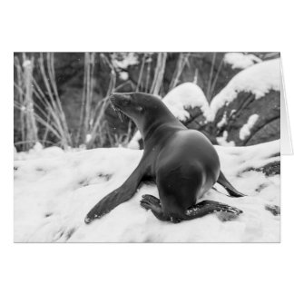 Sea Lion Pup on Snowy Hill Greeting Card