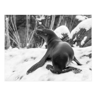 Sea Lion Pup on Snowy Hill Postcard