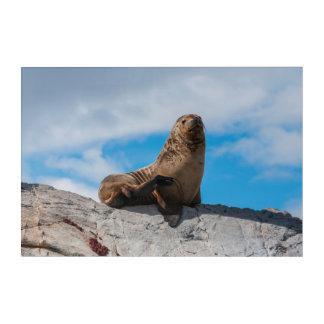 Sea Lion Resting on the Rocks Acrylic Print