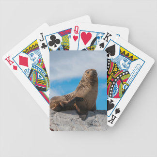 Sea Lion Resting on the Rocks Bicycle Playing Cards
