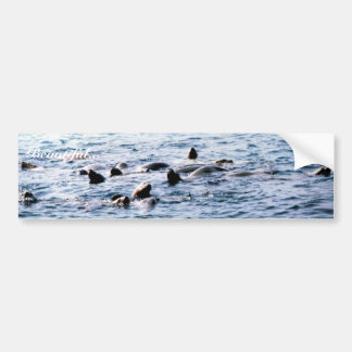 Sea Lion Steller Bumper Sticker