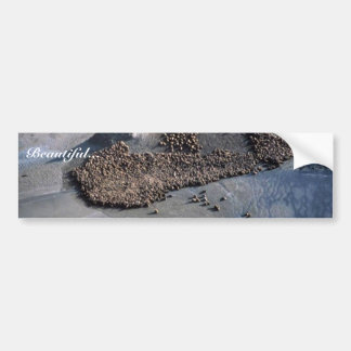 Sea Lions at Haulout - Aerial View Bumper Sticker