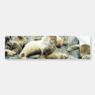 Sea Lions at Haulout Bumper Stickers