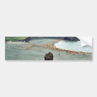 Sea Lions at Haulout Car Bumper Sticker
