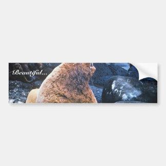 Sea Lions Bumper Stickers