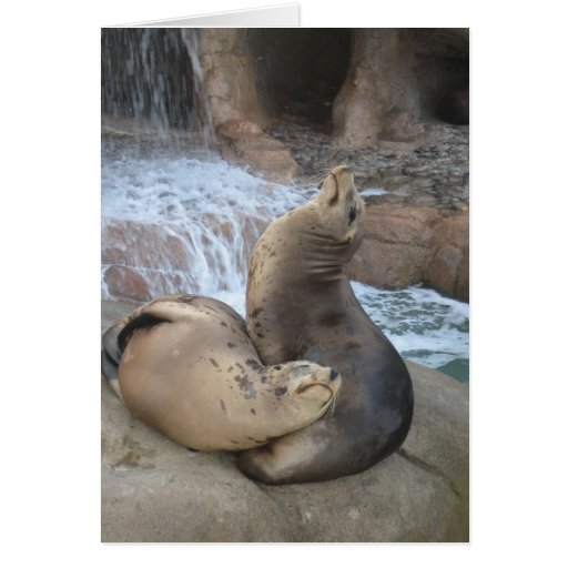 Sea Lions Greeting Cards