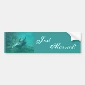 Sea Lions Just Married Bumper Sticker Car Bumper Sticker