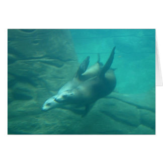 Sea Lions Notecard Stationery Note Card