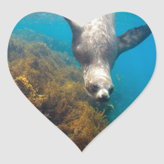 Sea lions playing underwater Galapagos Islands Heart Sticker