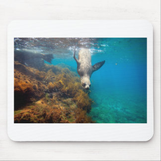 Sea lions playing underwater Galapagos Islands Mouse Pad