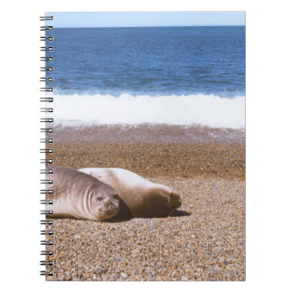Sea Lions Resting on Beach Note Books
