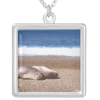 Sea Lions Resting on Beach Silver Plated Necklace
