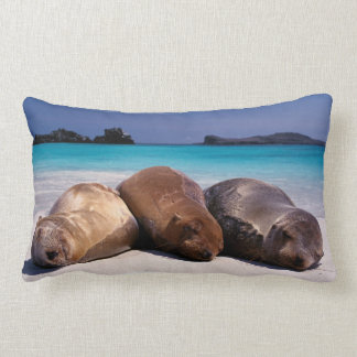 Sea Lions Sleeping On Beach | Ecuador Lumbar Cushion