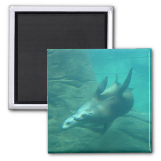 Sea Lions Square Magnet