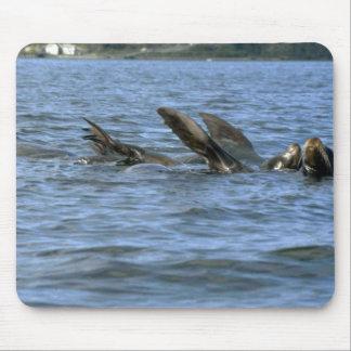 Sea Lions Swimming On Backs Mousepad
