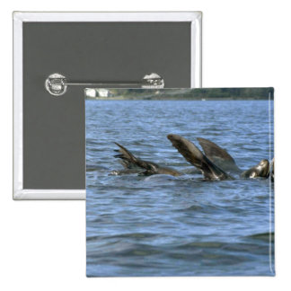 Sea Lions Swimming On Backs Pinback Buttons