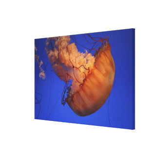 Sea nettle jellyfish canvas print